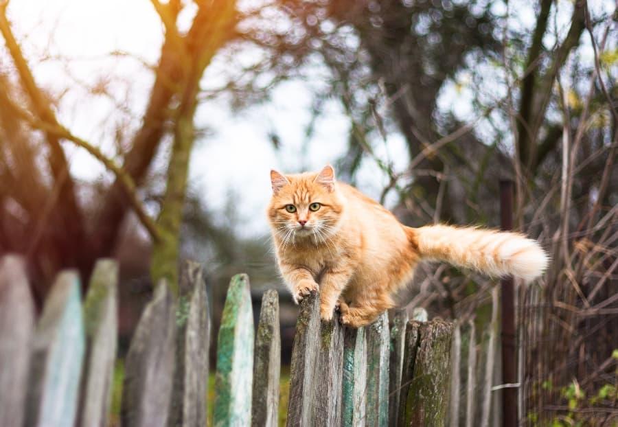 cat-walking-on-fence (1)