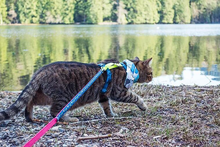 teddy-the-cat-walking-along-the-river (1)