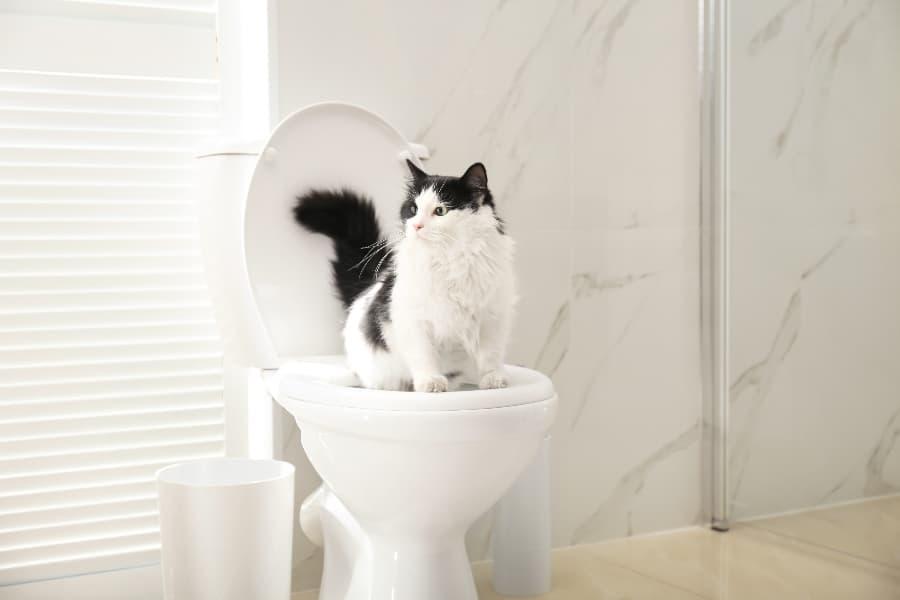 cat-using-toilet-compressed