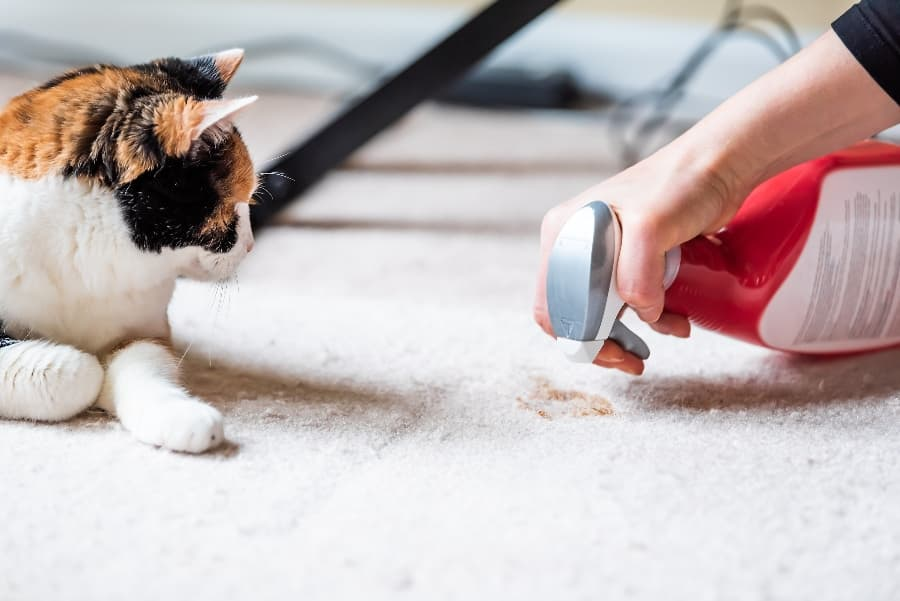 cleaning-up-cat-mess-with-pet-cleaner-compressed