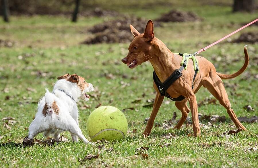 off-leash-dog-approaching-on-leash-dog (1)