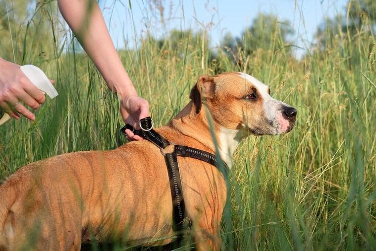 Large-dog-getting-bug-sprayed (1)