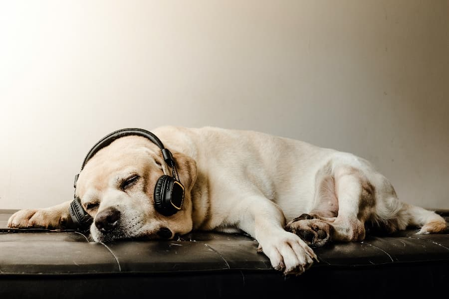 relaxed-dog-listening-to-music (1)