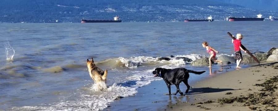 Spanish-banks-dog-park-vancouver