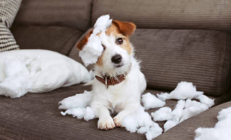 Dog-chewing-up-a-pillow (1)