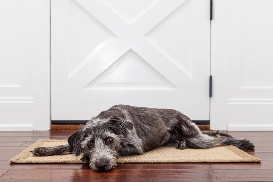 Dog-laying-by-front-door-pouting (1)