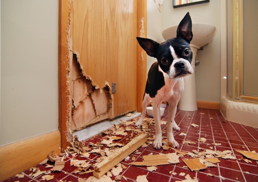 Puppy-chewed-through-wood-door (1)