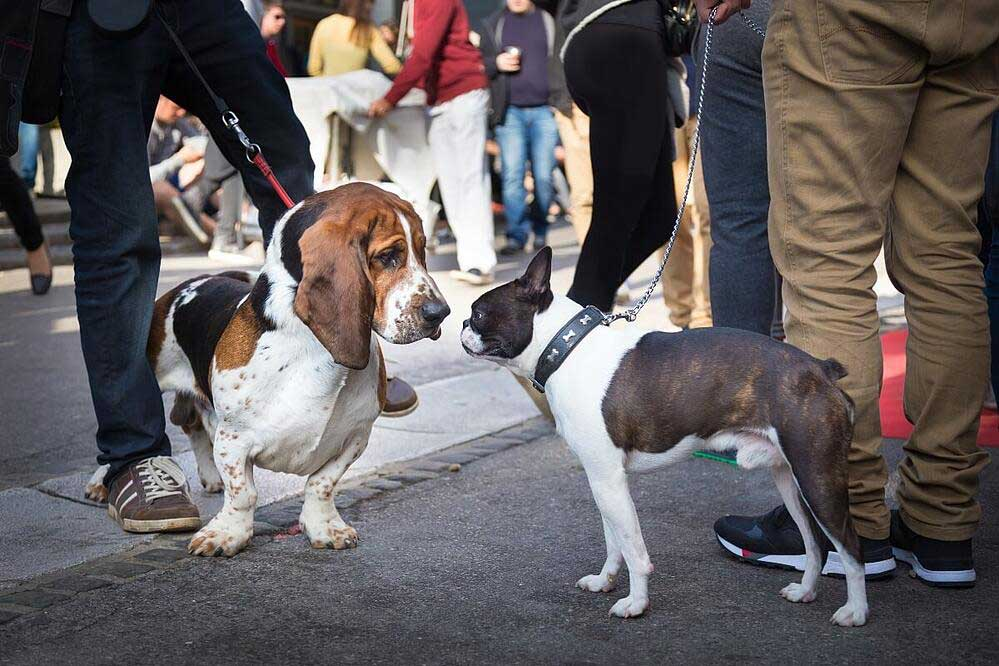 Two-dogs-meeting-at-crowded-event