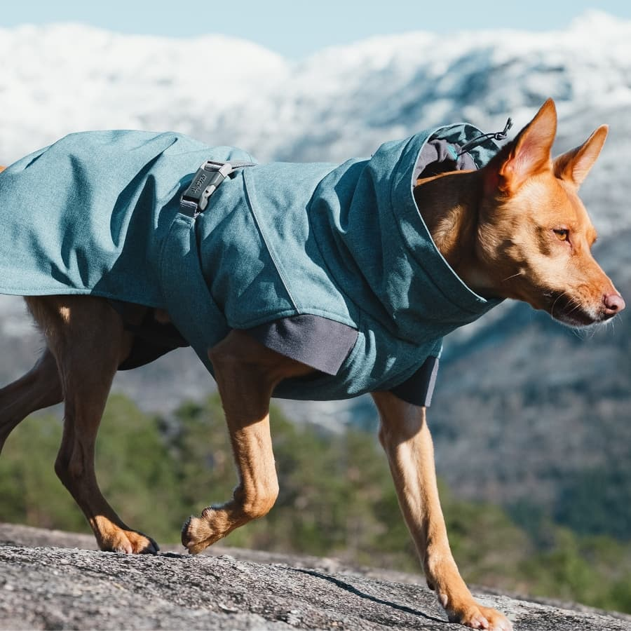 Expedition_Parka_bilberry (1)