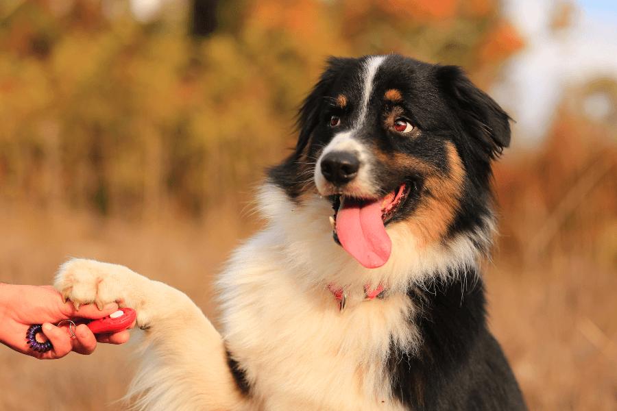 dog-clicker-training