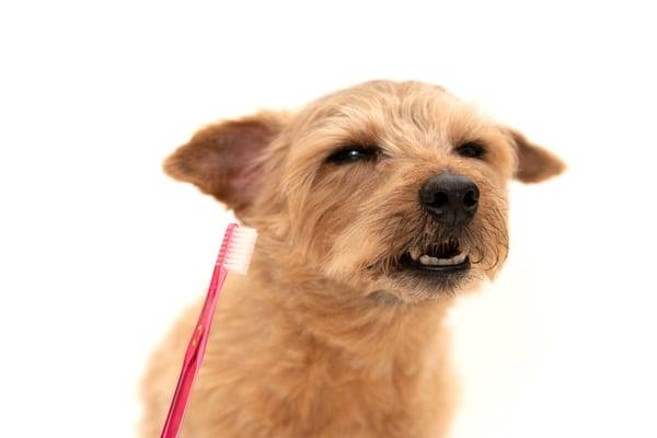 Dog hates toothbrush