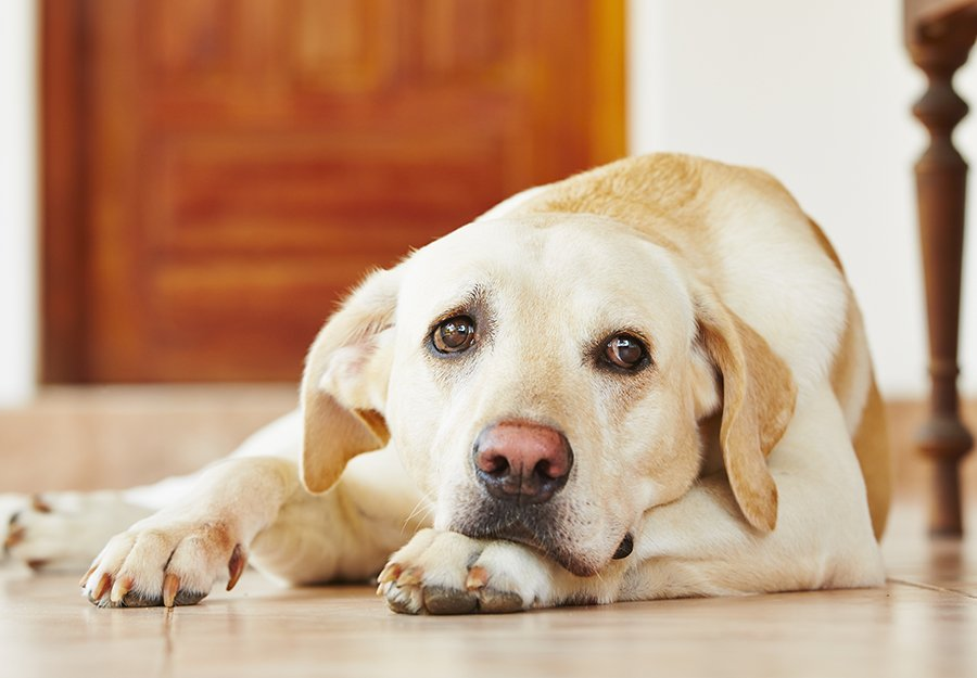 bored-dog-symptoms-solutions-image