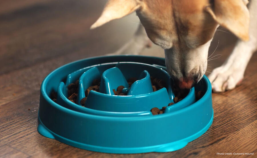 outward-hound-slow-feeder