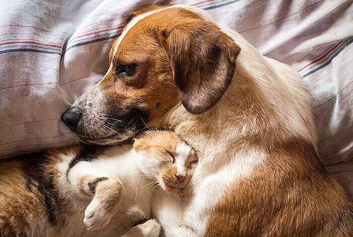 dog-cat-cuddle-bed