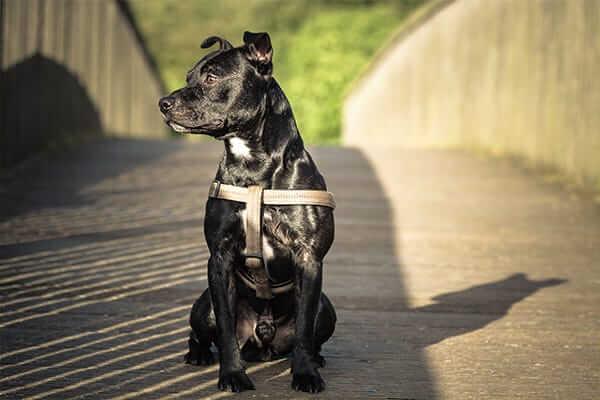 dog-shiny-coat