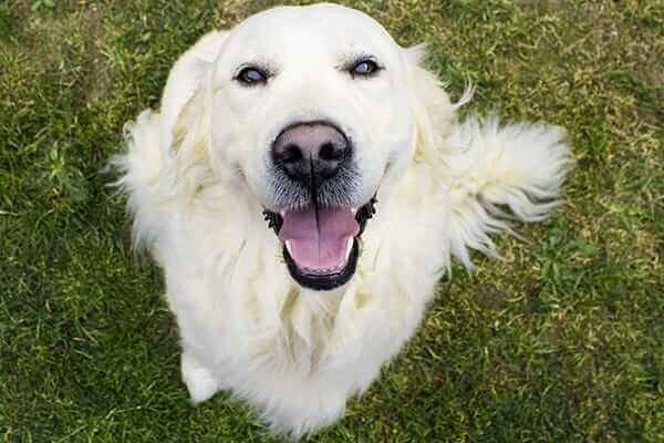 increased-immunity-dog