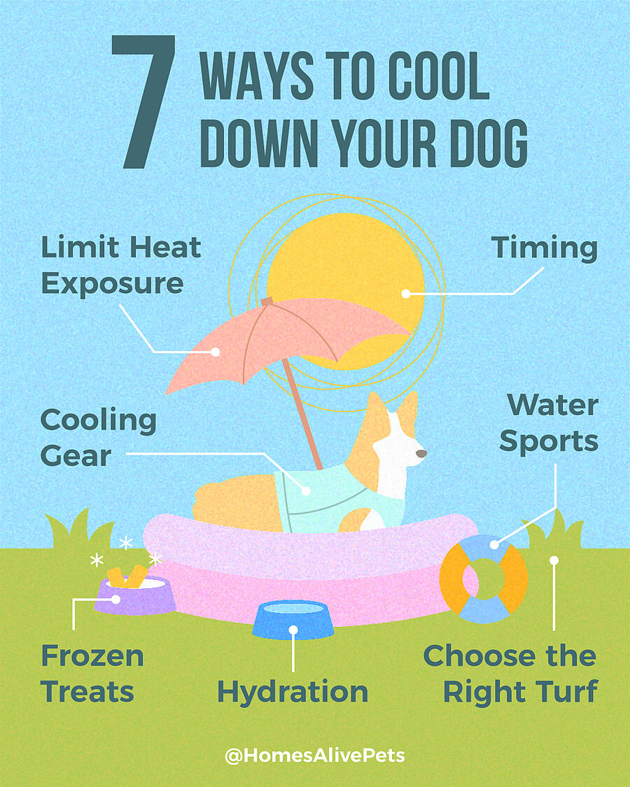 7-Ways-to-Cool-Down-Your-Dog-infographic