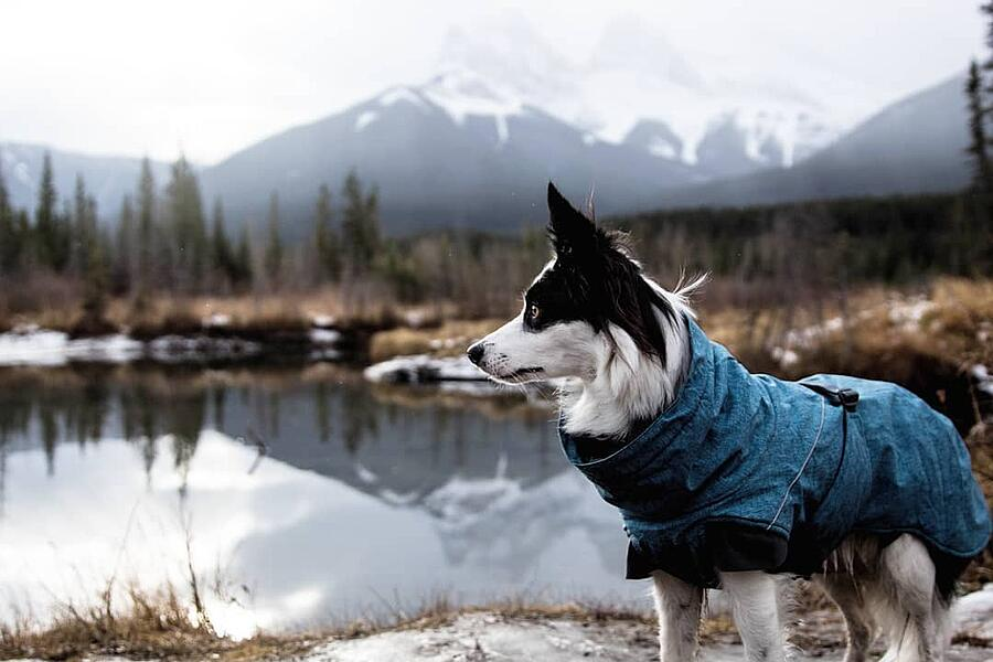 Camping with your dog