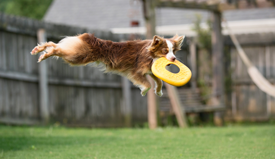 West Paw Dash Dog Frisbee1