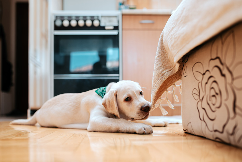 Common Signs That Your Dog is Bored
