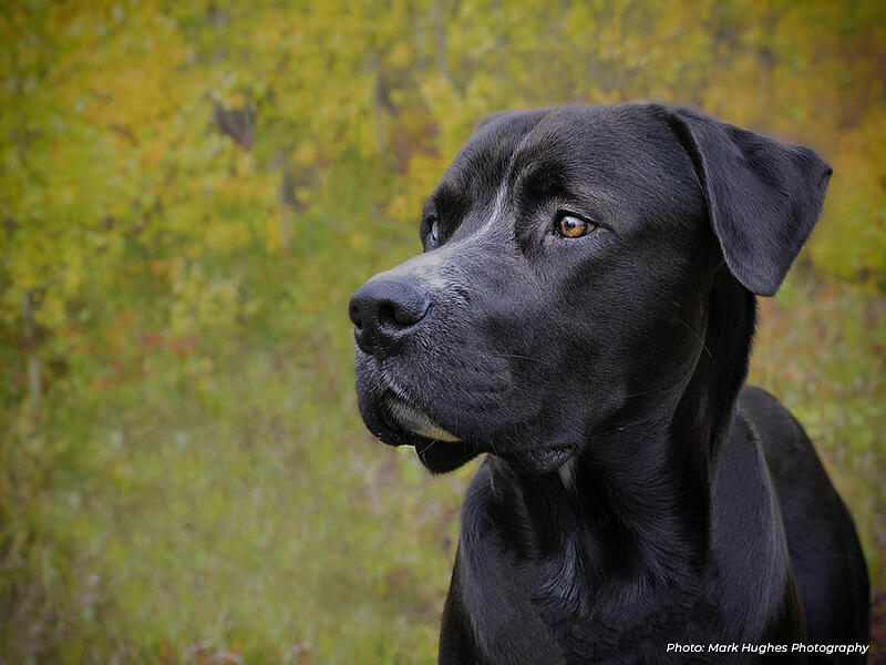 community-support-animal-rescue-dog-1