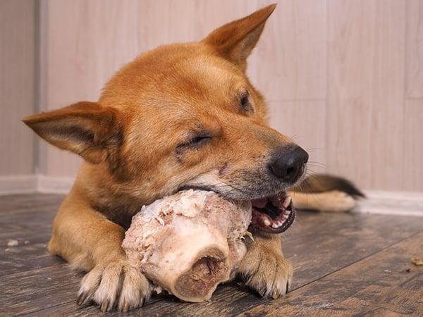 dog-chewing-raw-bone-1