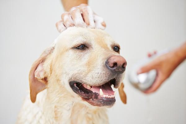 dog-showering