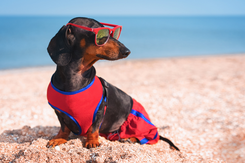 dog-sunglasses-summer