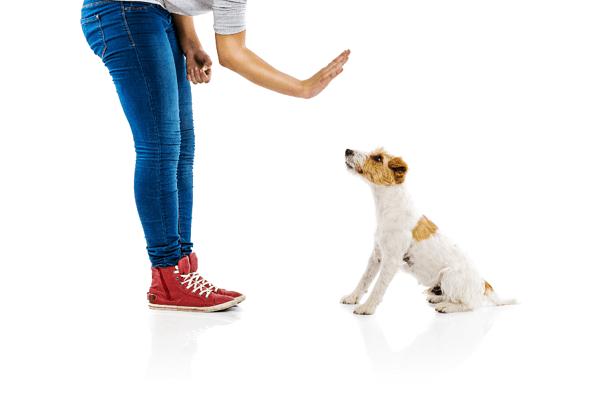 dog-training-hand