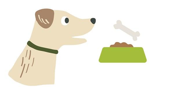 eating-habits-dog