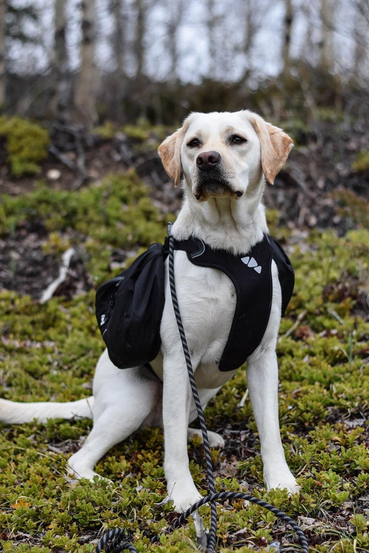 farley-hurtta-harness