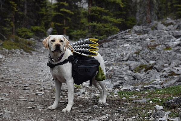 farley-in-canine-equipment-backpack