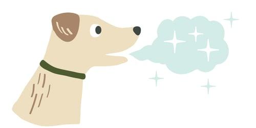 fresh-breath-dog