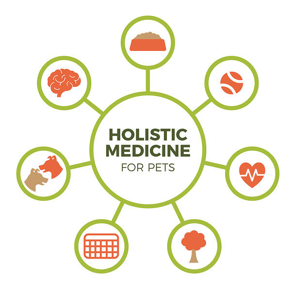holistic-medicine-wheel