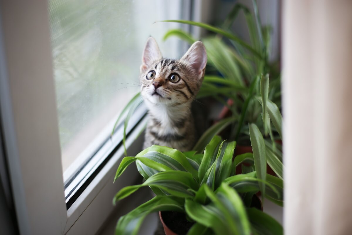 kitten-playing-in-planters