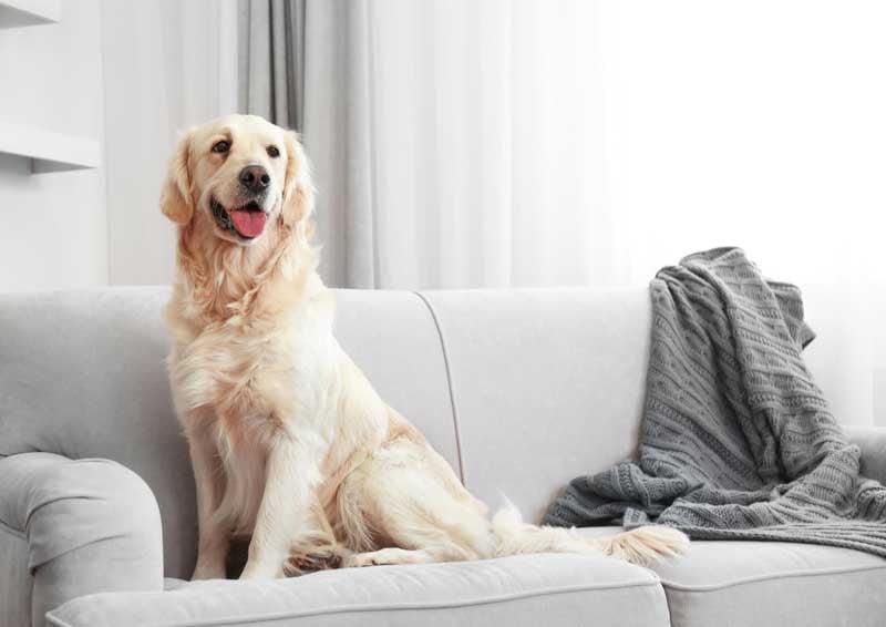 medium-large-breed-dog