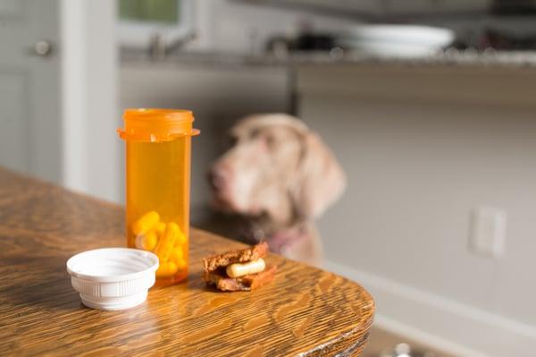 prescribed-medication-dog