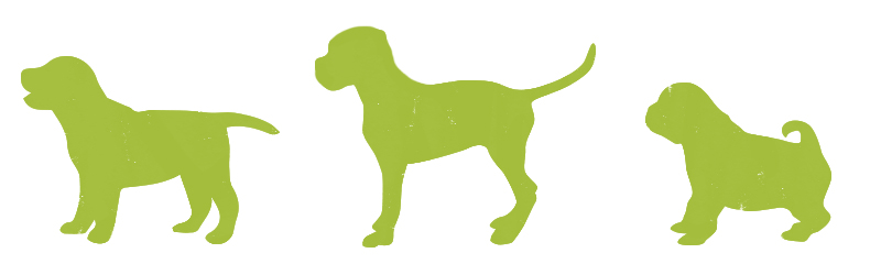 puppy-body-shapes-1