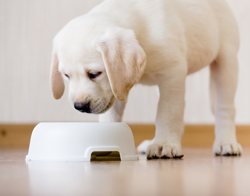 puppy-standing-over-food