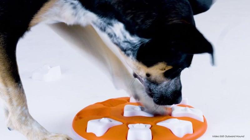 puzzle-toy-dog