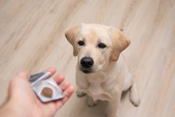 Diabetic dog food Canada