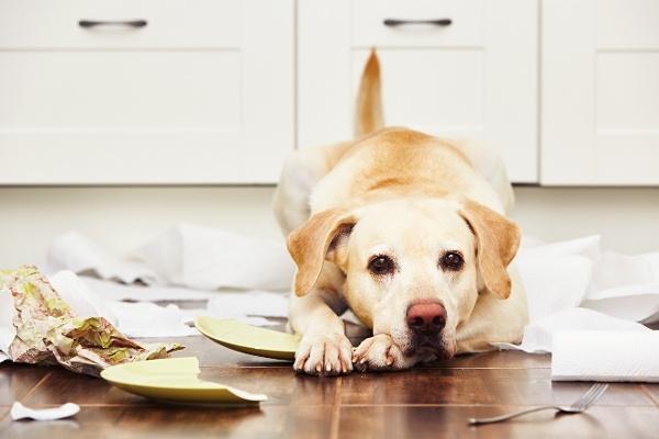 Low calorie dog treats