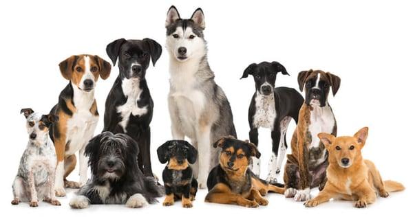 variety-dog-breeds