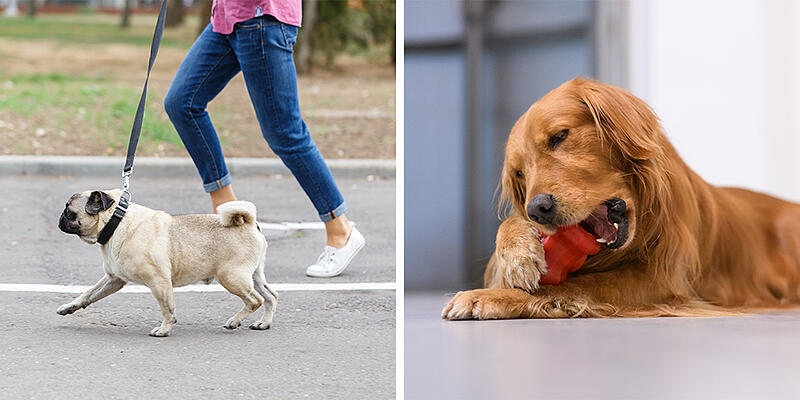 weight-loss-dog-exercise-3