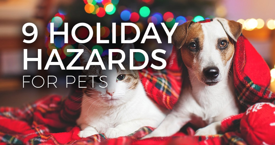 9-holiday-hazards-pets-article-feature