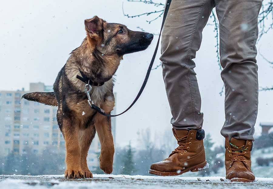 tips-for-walking-dog-winter-article-feature