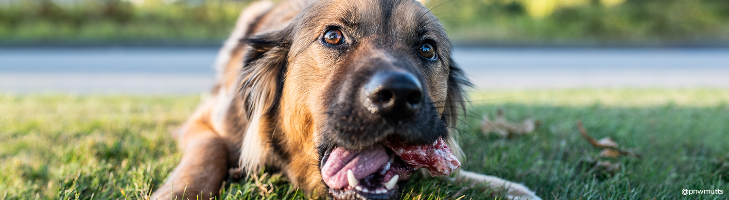 A Guide to Feeding Raw Bones For Dogs