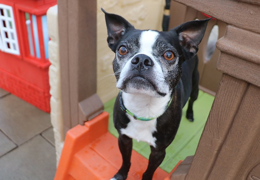 benefits-of-dog-daycare-article-feature