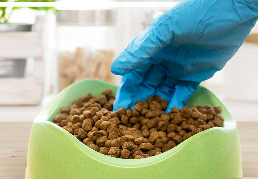bugs-in-dog-food-article-feature