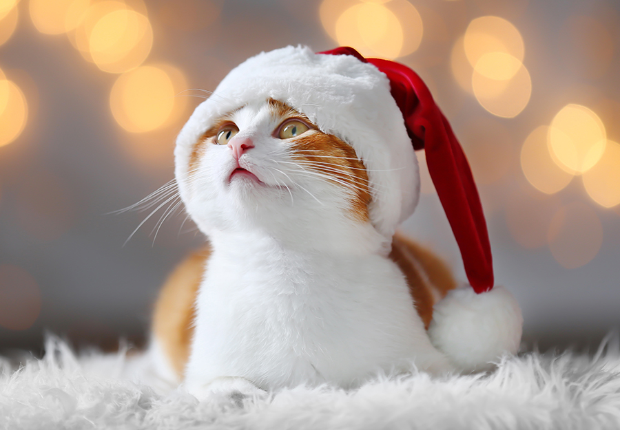 christmas-gifts-for-cats-article-feature